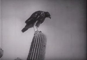 Birds of Prey - 1938