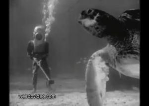 Aqua Frolics - 1940's