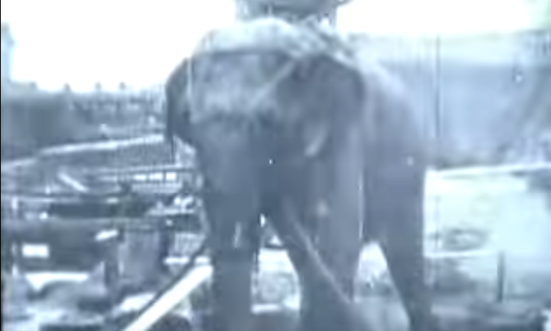 Thomas Edison: Electrocuting an Elephant - 1903